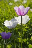 Uncultivated flowers in the spring field.Israel. — Stock Photo