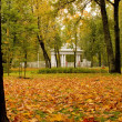 Autumn leaves in the Pavlovsk Park — Stock Photo