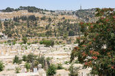 Mount of Olives from the walls of Jerusalem. — Stock Photo
