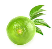 Full fresh lime and a branch — Stock Photo