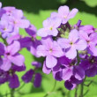 Violet flower on light breeze — Stock Video
