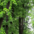 Branchs of trees with young green leaves on light wind in sunny day. HD 1920x1080. — Stock Video
