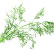 Branch of green dill — Stock Photo #47301267