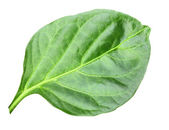 Wry green leaf of pepper — Stock Photo