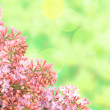 Background with branch of pink lilac — Stock Photo #47711007