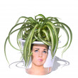 Stock Photo: Variegated pot plant in fun container