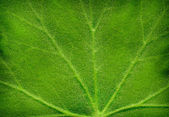 Texture of leaf — Stock Photo