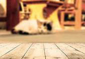 Cat lying in the street near cafe table — Stock Photo