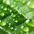 Water Drops On Green Leaf — Foto Stock