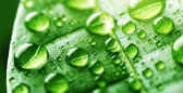 Water Drops On Green Leaf — Stock Photo