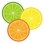 Colorful citrus slices set — Stock Vector