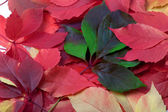 Background of multicolor autumn leaves — Stock Photo