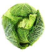 Savoy cabbage kopf mit wasser tropfen — Stockfoto