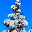 Winter fir tree on background of blue sky — Stock Photo