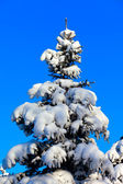 Winter fir tree on background of blue sky — Stockfoto