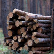 Royalty-Free Stock Photo: Stack of firewood in pine forest