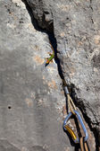 Sand lizard on rock and climbing equipment — Stock Photo