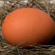 Brown chicken egg in nest - Stock Photo