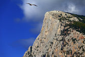 Summer rocks and seagull flying in blue sky — Stock Photo