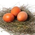 Chicken eggs in nest — Stock Photo