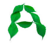 Letter A composed of green virginia creeper leaves — Stock Photo