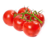 Ripe tomato on bunch with water drops — Stock Photo
