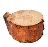 Güdük çam ağacı — Stok fotoğraf
