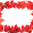 Autumn leaves frame isolated on white background — Stock Photo
