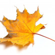 Stock Photo: Autumn yellowed maple leaf