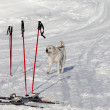 Stock Photo: Dog and skiing equipment on ski slope at nice day