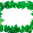 Green leaves frame on white background — Stock Photo