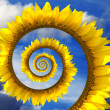 Abstract sunflower spiral — Stock Photo