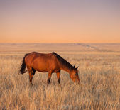 Horse grazing in evening pasture — Stock Photo