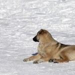 Dog resting on snowy ski slope at nice sun day — Stock Photo