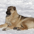 Dog resting in snowy ski slope — Stock Photo