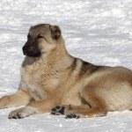 Dog resting in snowy ski slope — Stock Photo