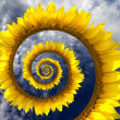Abstract sunflower spiral — Stock Photo #42473495