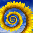 Abstract sunflower spiral — Stock Photo #44894145