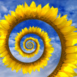 Abstract sunflower spiral — Stock Photo #46767317