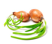 Two spring onions (Allium cepa) — Stock Photo
