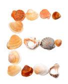 Letter E composed of seashells — Stockfoto