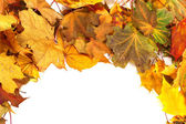 Autumn dry maple-leafs background — Stock Photo