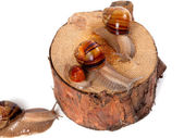 Snails on pine-tree stump — Stock Photo