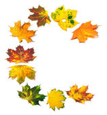 Letter C composed of autumn maple leafs — Foto Stock