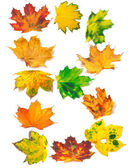 Letter B composed of autumn maple leafs — Foto Stock