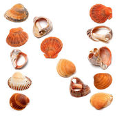 Letter N composed of seashells — Stock Photo