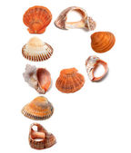 Letter P composed of seashells — Stock Photo