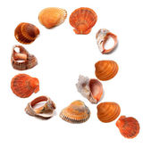 Letter Q composed of seashells — Stock Photo
