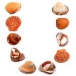Letter U composed of seashells — Stock Photo #50539587