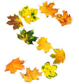Letter S composed of autumn maple leafs — Stock fotografie